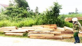 Tạm đình chỉ nhân viên bảo vệ rừng giấu 155 khúc gỗ trái phép trong nhà