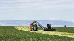 Bên trong nông trại hữu cơ làm nên những sản phẩm Amway chất lượng