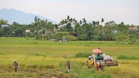 Duyên hải Nam Trung Bộ và Tây Nguyên vẫn đang là vùng trũng về xây dựng nông thôn mới