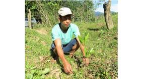"""Quảng Bình: hơn 15.000 cây giống """"đểu"""" cho dân nghèo trồng rừng"""
