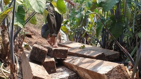Một phần gỗ mun lậu được cơ quan chức năng phát hiện tại xã Thượng Trạch.