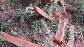Vụ phá rừng Phong Nha - Kẻ Bàng hồi đầu năm 2019