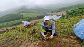 Kỹ sư lâm nghiệp hướng dẫn người Mã Liềng trồng cây gỗ bản địa