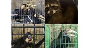 Các tỉnh miền trung đi đầu trong nỗ lực giảm thiểu vi phạm về động vật hoang dã