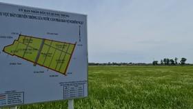 Quảng Bình: Xác định giống lúa của Tổng Công ty Sông Gianh kém chất lượng
