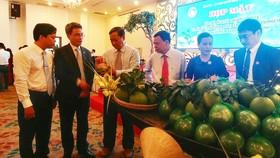 Lãnh đạo tỉnh Bến Tre giới thiệu sản phẩm Bưởi da xanh. Ảnh: Hàm Luông
