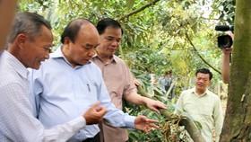 Thủ tướng Nguyễn Xuân Phúc khảo sát thực tế tại vườn sầu riêng của ông Võ Văn Phúc ở xã Hiệp Đức, huyện Cai Lậy, tỉnh Tiền Giang. Ảnh: NGUYỄN HỮU