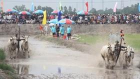 Sôi động đua bò ở Châu Đốc ngày 18-5