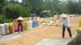 An Giang kiến nghị cho xuất khẩu 822.500 tấn nếp và gạo hạt tròn