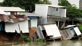 Sạt lở nghiêm trọng khiến 15 hộ dân tại An Giang phải di dời khẩn cấp