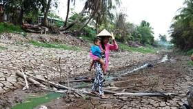 Hơn 58.000ha lúa ở ĐBSCL bị thiệt hại do hạn mặn