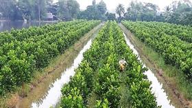 Phát triển thêm 450.000ha trái cây và thủy sản ở ĐBSCL đến năm 2030