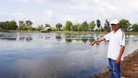 Nuôi tôm tự phát gây thiệt hại đất lúa ở Kiên Giang