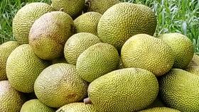 Mít Thái ở ĐBSCL tăng lên 50.000 - 60.000 đồng/kg