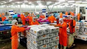 An Giang xuất khẩu lô cá tra công nghệ cao vào thị trường khó tính