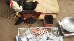 Bắt 37 đối tượng đá gà ăn tiền ở An Giang