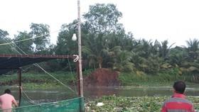 Sạt lở đất làm 4 tấn cá điêu hồng giống trôi ra sông ở Vĩnh Long