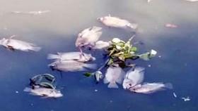 Nghiên cứu thực hiện nạo vét lòng kênh Nhiêu Lộc - Thị Nghè để cứu cá
