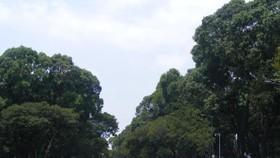 Điều chỉnh giao thông khu vực trung tâm thành phố