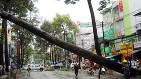 Kiểm tra xử lý cây xanh hạn chế gãy đổ trong mùa mưa bão