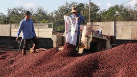 Low price forces farmers to keep coffee in stock