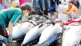 Seafood exports to EU drop due to yellow card