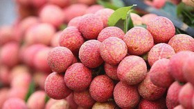 Vietnamese fresh lychees allowed to be imported into Japan