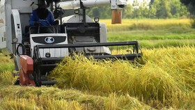 Farmers use combine harvester for rice harvesting. (Photo: SGGP)