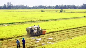 Golden time to promote Vietnamese rice brand