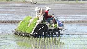 Farmers in Hau Giang Province grow rice by rice planting machine. (Photo: SGGP)
