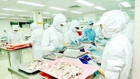 Food processing at CJ Cau Tre Joint Stock Company. (Photo: SGGP)