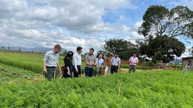The delegation of Ho Chi Minh City led by Mr. Le Huynh Minh Tu, Deputy Director of the Department of Industry and Trade, visits the carrot farm of Xuan Thai Thinh Company. (Photo: SGGP)