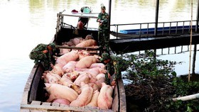 Ministry calls for support to prevent live pig, pork product smuggling