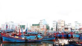 Tam Quan Fishing Port. (Photo: SGGP)