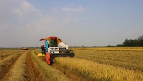 Rice production efficiency of eight provinces in Mekong Delta improved