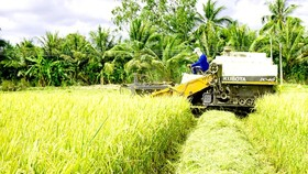Mekong Delta farmers put effort into elevating Vietnamese rice