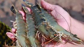 Aquaculture farmers encounter several difficulties: MARD