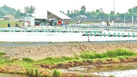 Spontaneous white-leg shrimp farming in freshwater areas poses risks