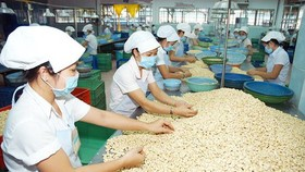 Vietnamese cashew industry sees trade deficit for the first time
