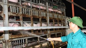 Vietnam urgently suspends import of live pigs from Thailand because of ASF