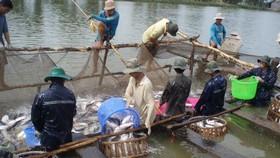 Shrimp, pangasius exports to US market make breakthrough