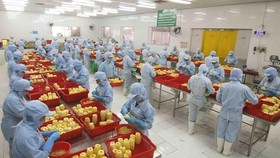 Manufacturing and processing sector playing key role in FDI attraction