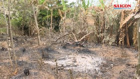 Truy tìm kẻ chủ mưu vụ phóng hỏa đốt cháy 500 trụ tiêu ở Đắk Lắk