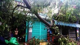 Tan hoang sau bão số 5, phố biển Quy Nhơn nỗ lực khắc phục thiệt hại