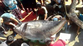 Câu được cá ngừ vây vàng nặng 386kg