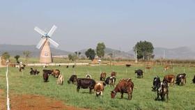 Tăng đầu tư, đáp ứng yêu cầu xuất khẩu nông sản