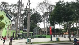 Định hình, tăng tính thẩm mỹ cho hệ thống cây xanh