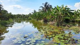 Bến Tre xây hồ chứa nước ngọt để phục vụ người dân khi hạn, mặn
