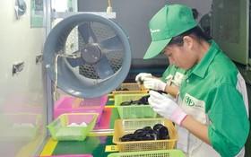 安富越塑膠公司生產線一隅。