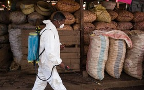 馬達加斯加鼠疫致124 死,多國加強檢查。(圖源:互聯網)